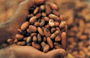 coca-beans